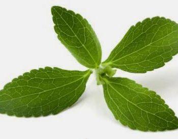 adakahh stevia adalah racun