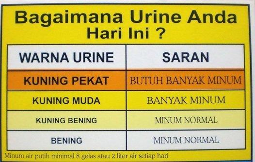 pastikan warna air kencing anda dahulu untuk mengetahui 9 jenis warna air kencing