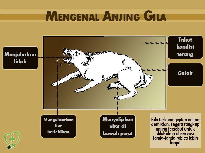 Penyakit Kucing Gila Kucing Utara Risiko Penyakit Dari