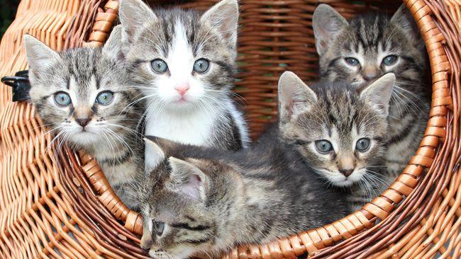 Petua Mengelakkan Kucing Kencing Merata