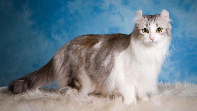 Jenis Kucing Pelik Yang Ramai Tidak Tahu Daily Rakyat