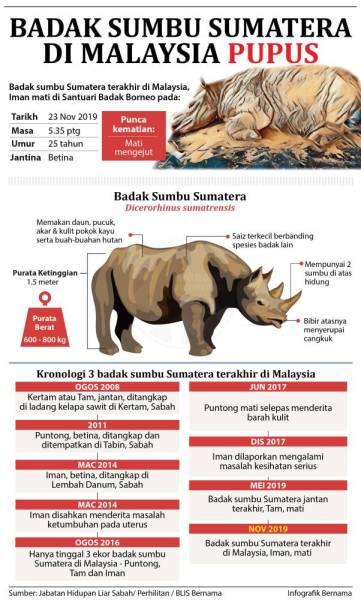 badak sumbu sumatera
